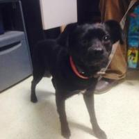 Adopt A Pet :: Roscoe - Boonville, IN