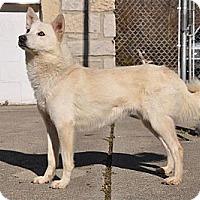 Adopt A Pet :: Jack - Peru, IN