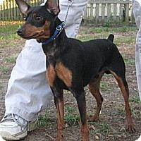 Adopt A Pet :: Spike - Jacksonville, FL
