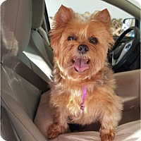 Adopt A Pet :: Isabelle - Indianapolis, IN