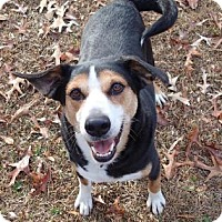 Adopt A Pet :: Elvis - Ravenel, SC