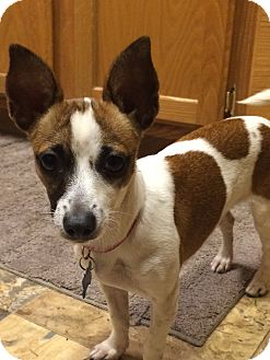 Terrier (Unknown Type, Small) Mix Dog for adoption in Gig Harbor, Washington - Eliza