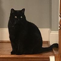 Adopt A Pet :: Jade - Herndon, VA