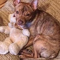 Adopt A Pet :: Bradley - Mentor, OH