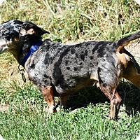 Adopt A Pet :: Smokey, possible new home - Spokane, WA