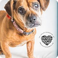 Adopt A Pet :: Remi - Inglewood, CA