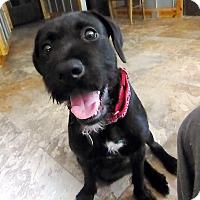 Adopt A Pet :: Neffie - Annapolis, MD