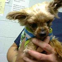 Adopt A Pet :: BAILI - Atlanta, GA
