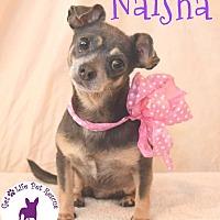 Adopt A Pet :: Naisha - Wellington, FL