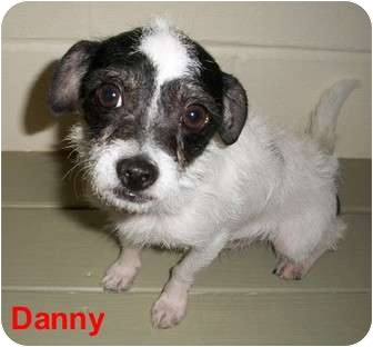 Terrier (Unknown Type, Small) Mix Dog for adoption in Slidell, Louisiana - Danny
