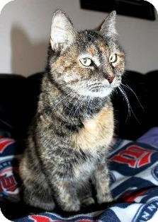 Domestic Shorthair Cat for adoption in Osseo, Minnesota - Sammie