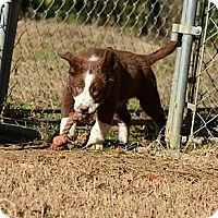 Adopt A Pet :: Nathan - New Boston, NH