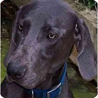 Adopt A Pet :: Rocco  **ADOPTED** - Eustis, FL