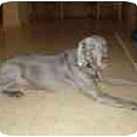 Adopt A Pet :: Lilly  **ADOPTED** - Eustis, FL