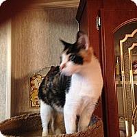 Adopt A Pet :: Trixie - Pace, FL