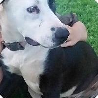 Adopt A Pet :: DONETELLO - Childress, TX