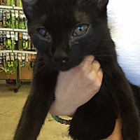 Adopt A Pet :: Kelli - Cerritos, CA