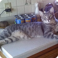 Adopt A Pet :: Olaf - Pasadena, CA