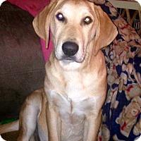 Adopt A Pet :: Cooter - Morgantown, WV