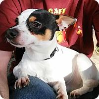 Adopt A Pet :: Norton - Fair Oaks Ranch, TX