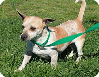 Dachshund Mix Dog for adoption in Brattleboro, Vermont - Queenie