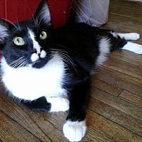 Adopt A Pet :: Prince - Lancaster, CA