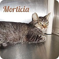 Adopt A Pet :: Morticia - Anderson, IN
