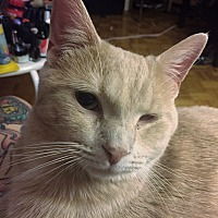 Adopt A Pet :: Alfie - Toronto, ON