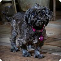 Adopt A Pet :: Gina - Valparaiso, IN