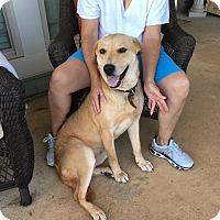 Adopt A Pet :: Sarah - Kittery, ME