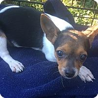 Adopt A Pet :: Jimmy - SOUTHINGTON, CT