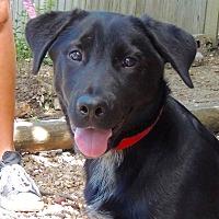 Adopt A Pet :: Clyde - Joplin, MO