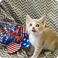 Adopt A Pet :: Carl - Addison, IL