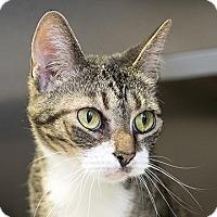 Adopt A Pet :: Vixen - Richmond, VA