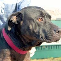 Adopt A Pet :: Samantha - Enterprise, AL