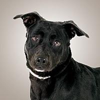 Adopt A Pet :: Harley - Prescott, AZ