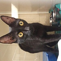 Adopt A Pet :: Blackie - Camden, DE