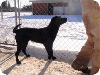 Labrador Retriever Mix Dog for adoption in Barron, Wisconsin - J-Rod