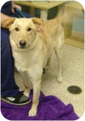 Labrador Retriever Mix Dog for adoption in Chambersburg, Pennsylvania - Eva
