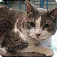 Adopt A Pet :: Sebastian - Markham, ON