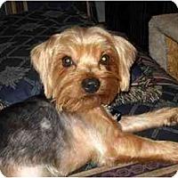 Adopt A Pet :: Jermey - Conroe, TX