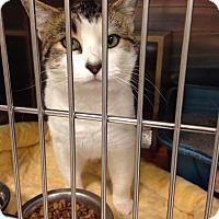 Adopt A Pet :: Andy - Muncie, IN
