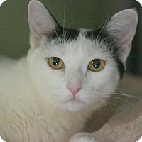 Adopt A Pet :: Hazel - Canoga Park, CA