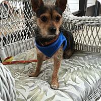 Adopt A Pet :: Coco - Leesburg, FL