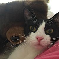 Adopt A Pet :: Nina - Sunny Isles Beach, FL