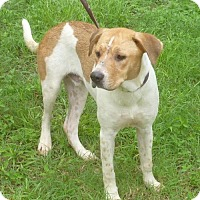 Adopt A Pet :: Willy - Livingston, TX