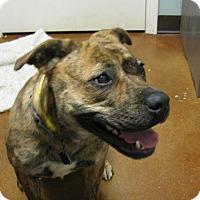 Adopt A Pet :: Ahnna - South Dennis, MA