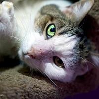 Adopt A Pet :: Stitch - Tucson, AZ