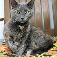 Adopt A Pet :: Aurora - Paris, ME