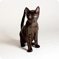 Adopt A Pet :: Raina - Kingston, ON